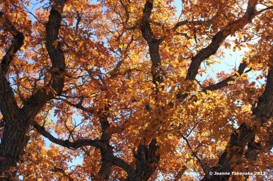 2012 Orange leaves in sun copy