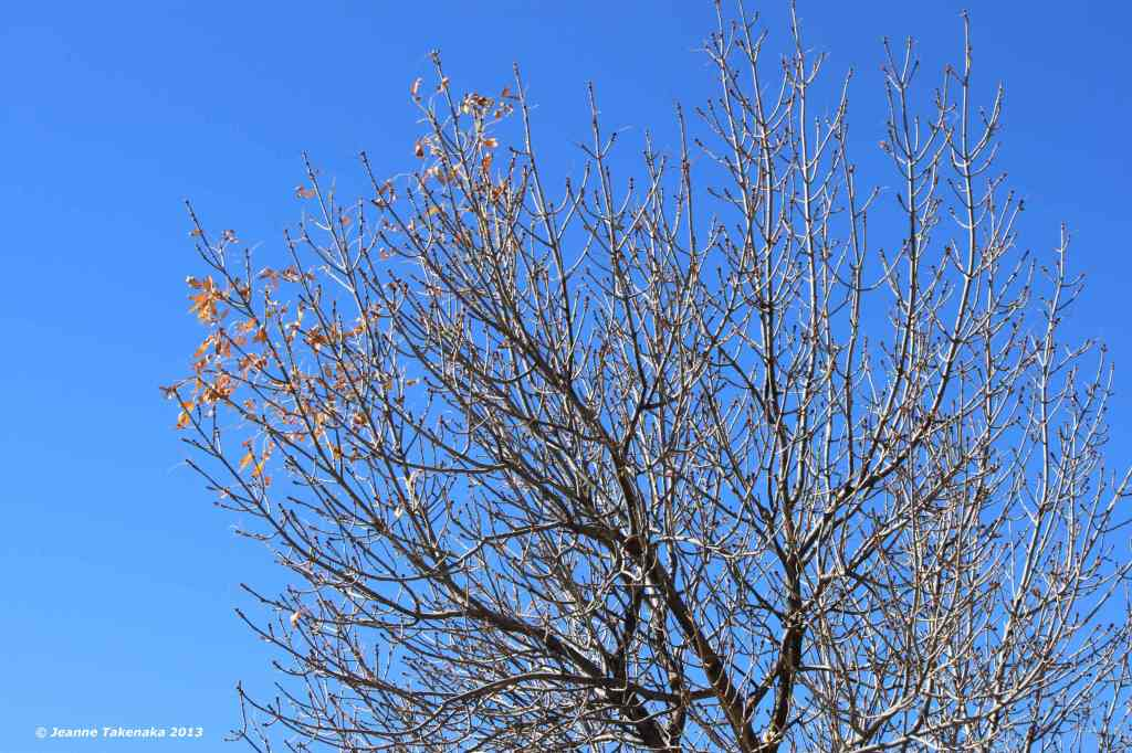 Autumn Bare Branches