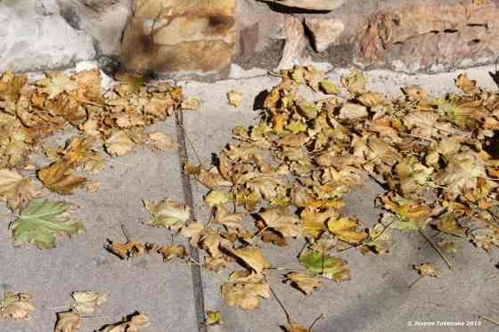 Autumn fallen leavesI