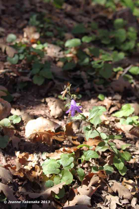 Autumn purple flower