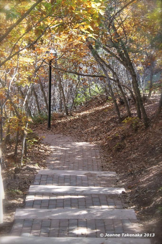Photo fo a path with yellow-leafed trees overhanging it
