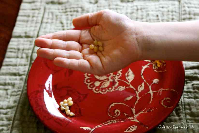 A child's hand holding five kernels of corn, symbolic of what the Pilgrims had to eat their first winter in the new land.