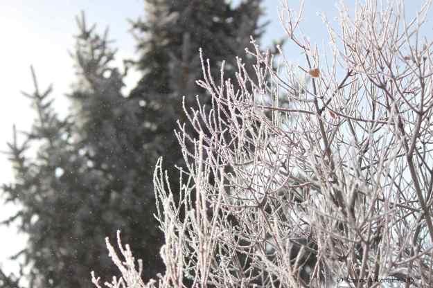 Winter pic copy