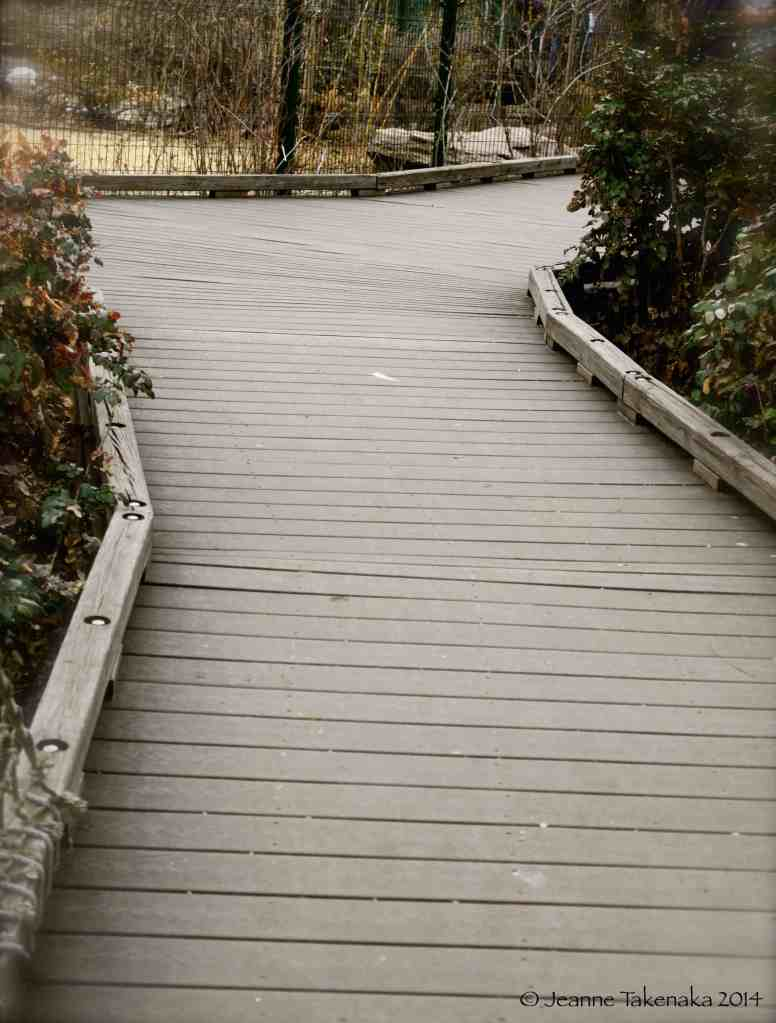 Photo of a wooden path which Y's off into two directions