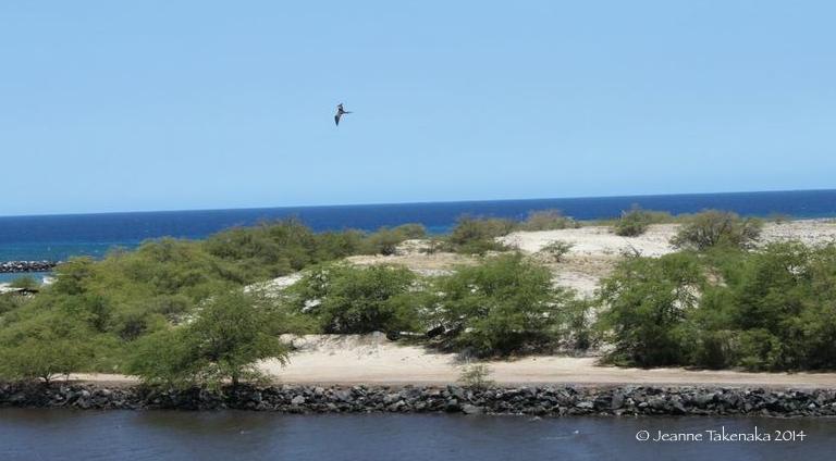 Bird flying solo