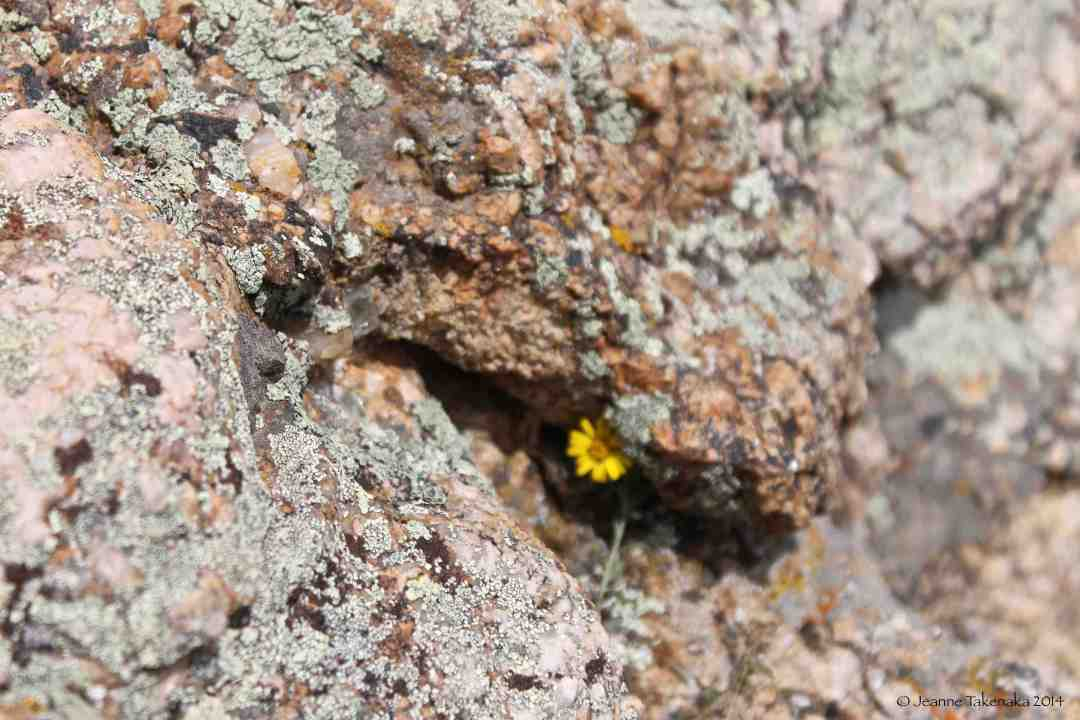 A small flower peeking out from behind much larger rocks