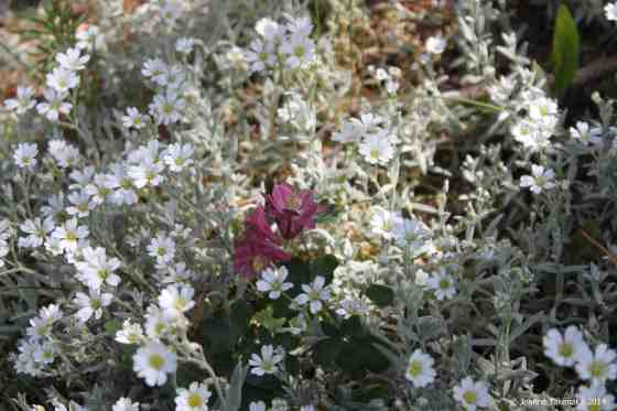Wild flowers burgundy amid white