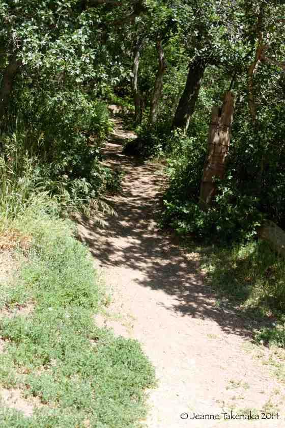 Sunny-shady path