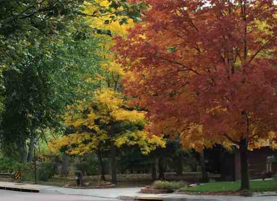 Autumn Brilliance
