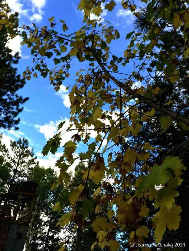 Mountain fall leaves