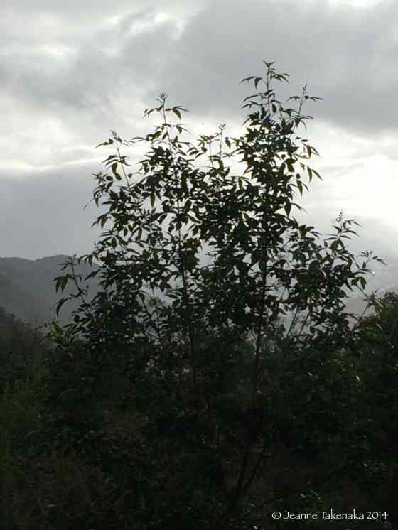 Tree with clearing storm