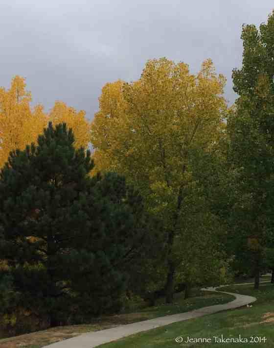Aspen and pine