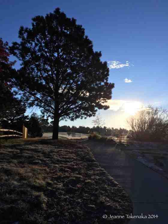 Frosty Silhouette