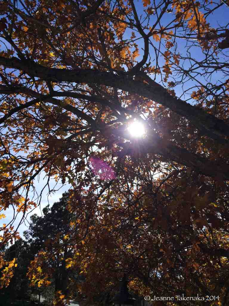 Sun in leaves
