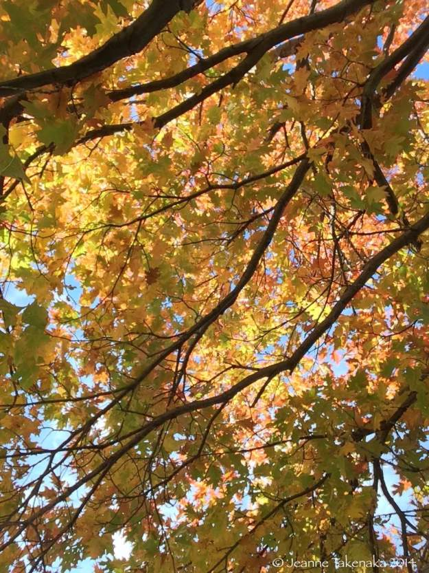 Yellow leaves in sunlight
