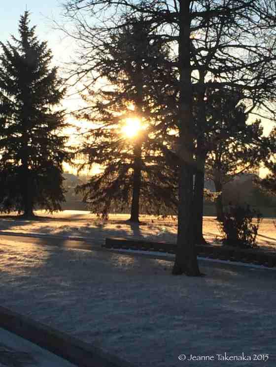 Wintry sun thru trees