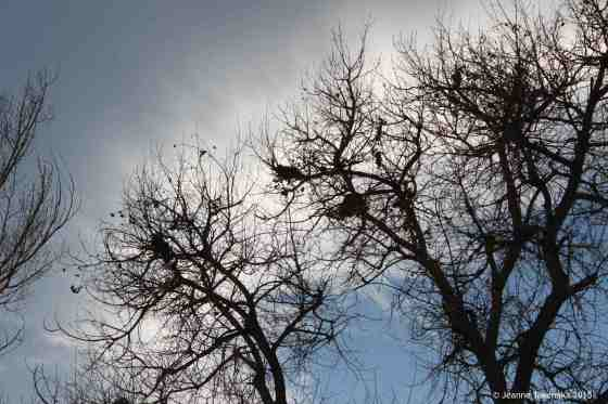 Bare branches blue sky