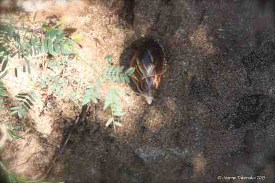 Sea Animal hiding