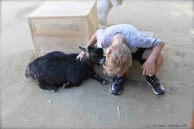 Boy meets goat