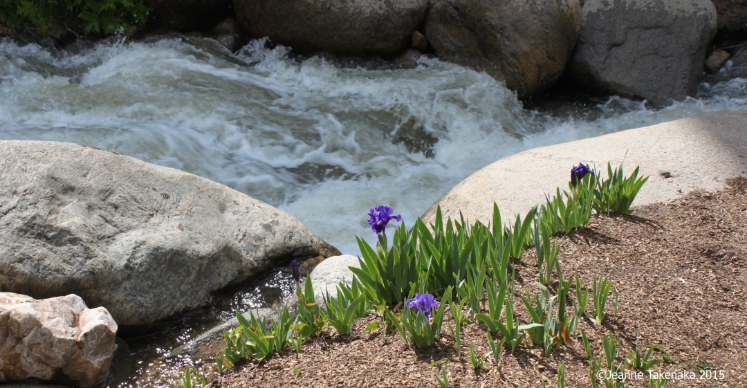 A fast flowing river moving between boulders with irises growing on one side of the river