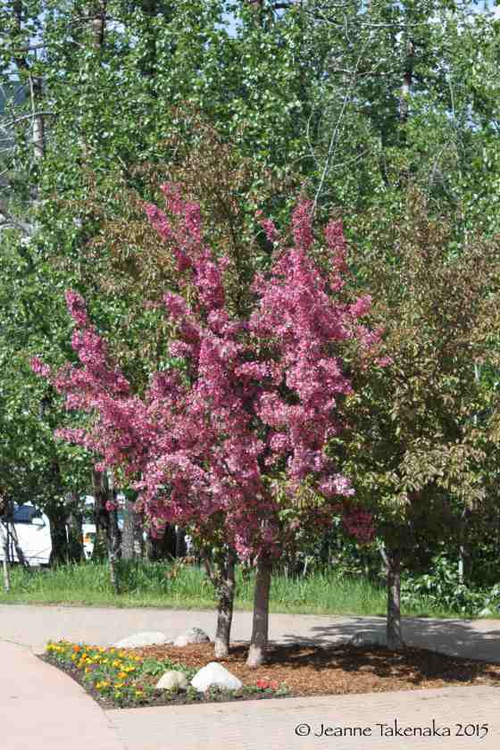 Pink blossoming tree with green
