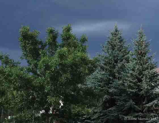 Storm behind trees