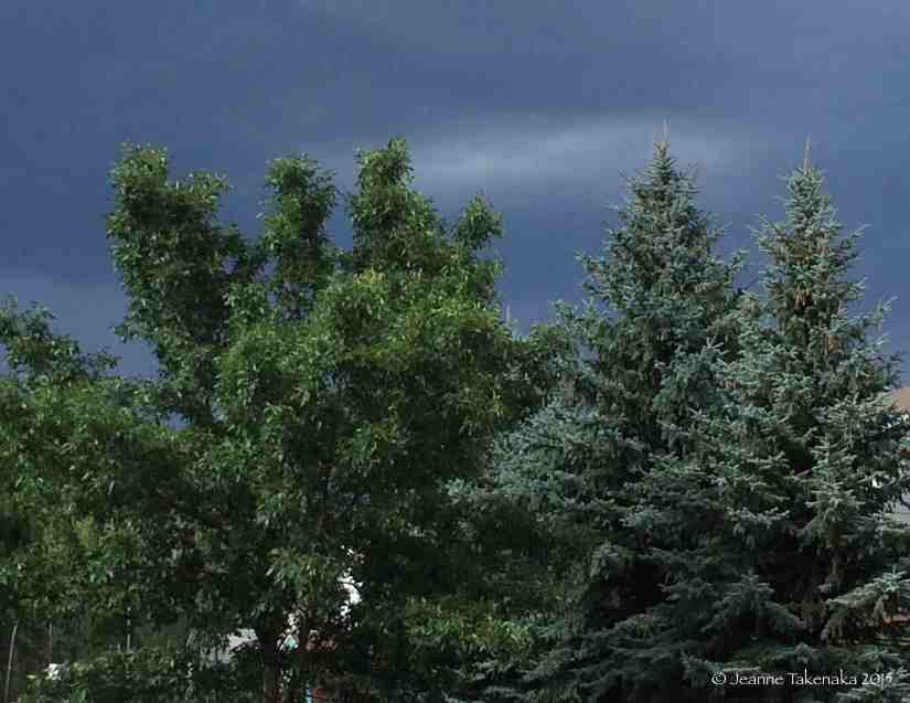 Storm behind trees