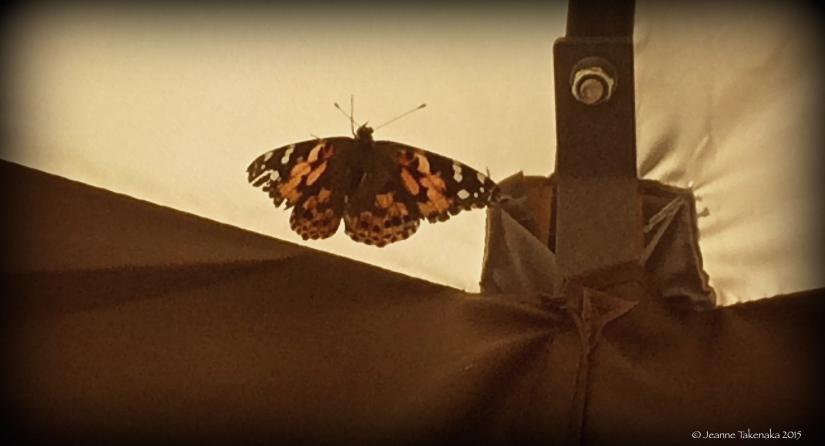 Monarch Butterfly copy