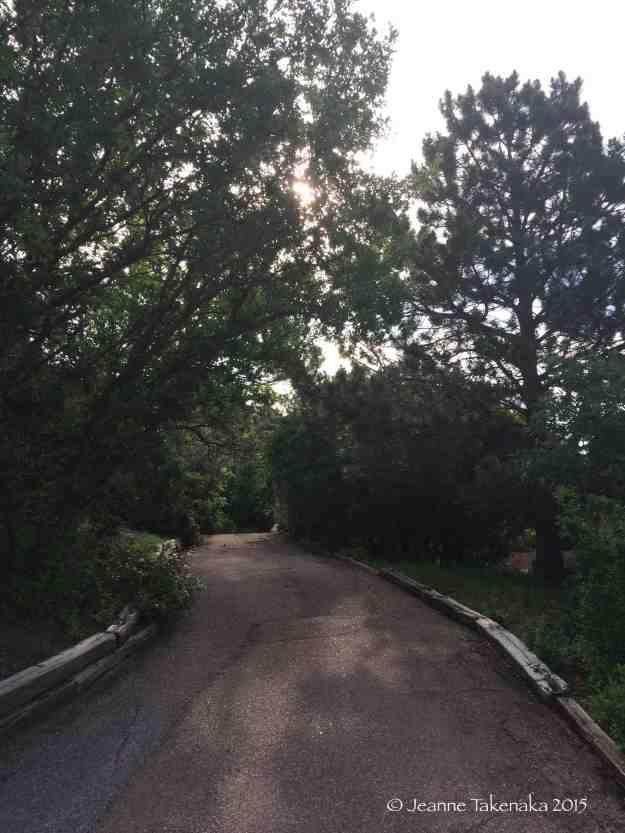 Sun dappled road