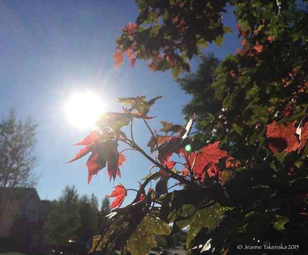 Sun lightened leaves