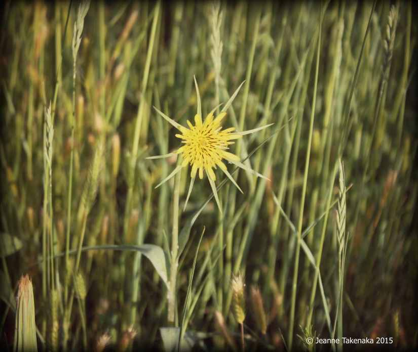 Yellow flower alone copy