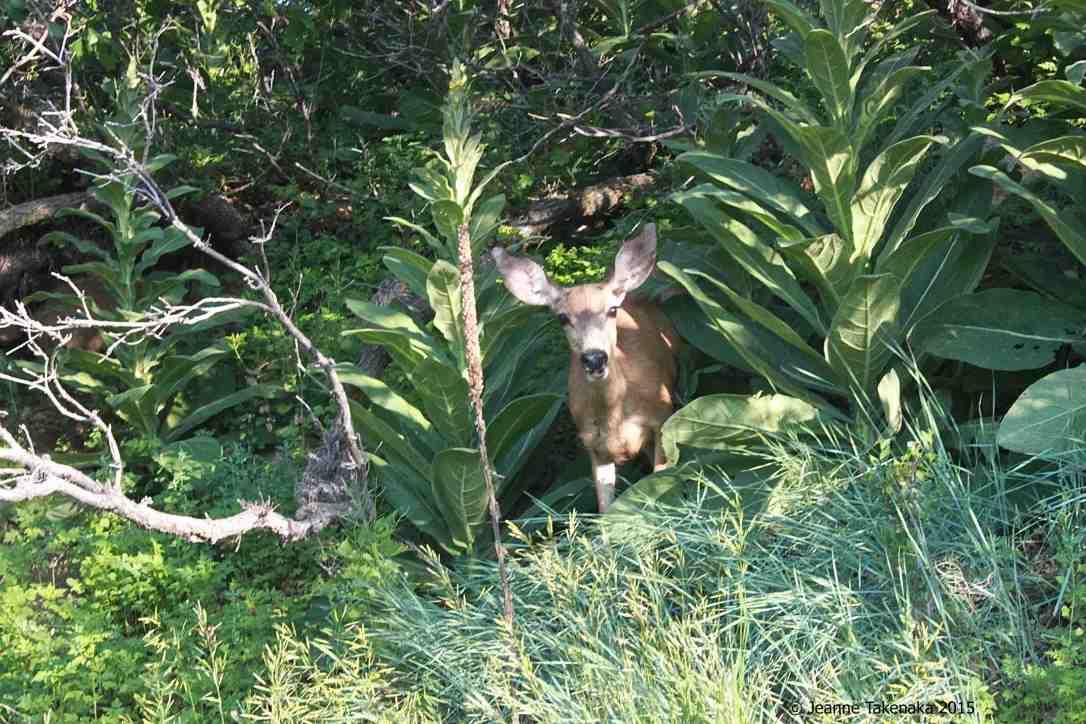 Quiet Deer