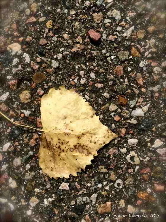 Leaf on pavement
