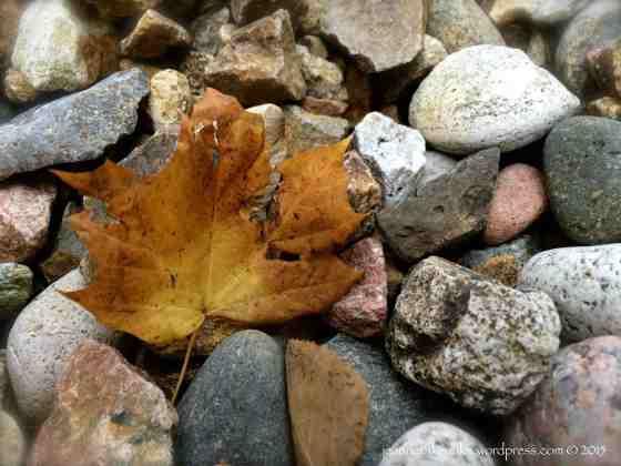 Brown leaf among rocks
