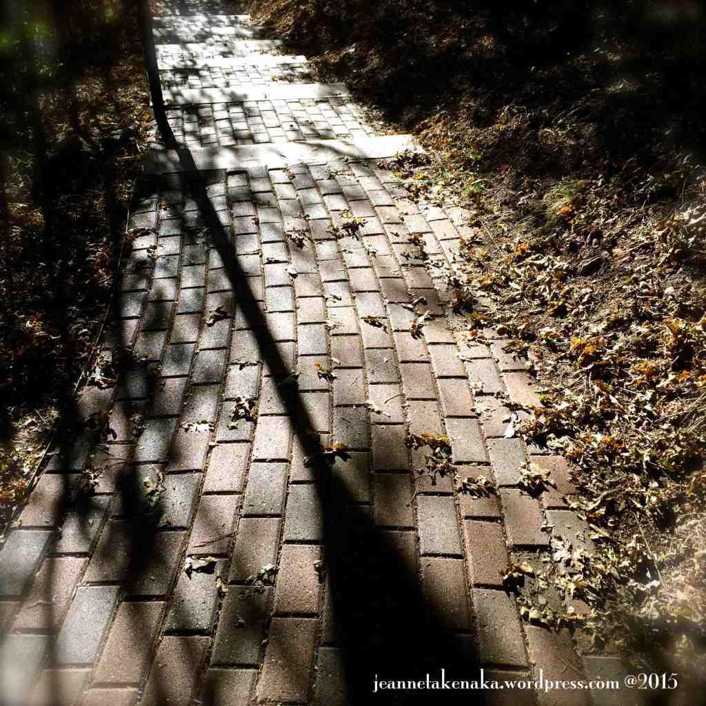 Leafy shadowed path