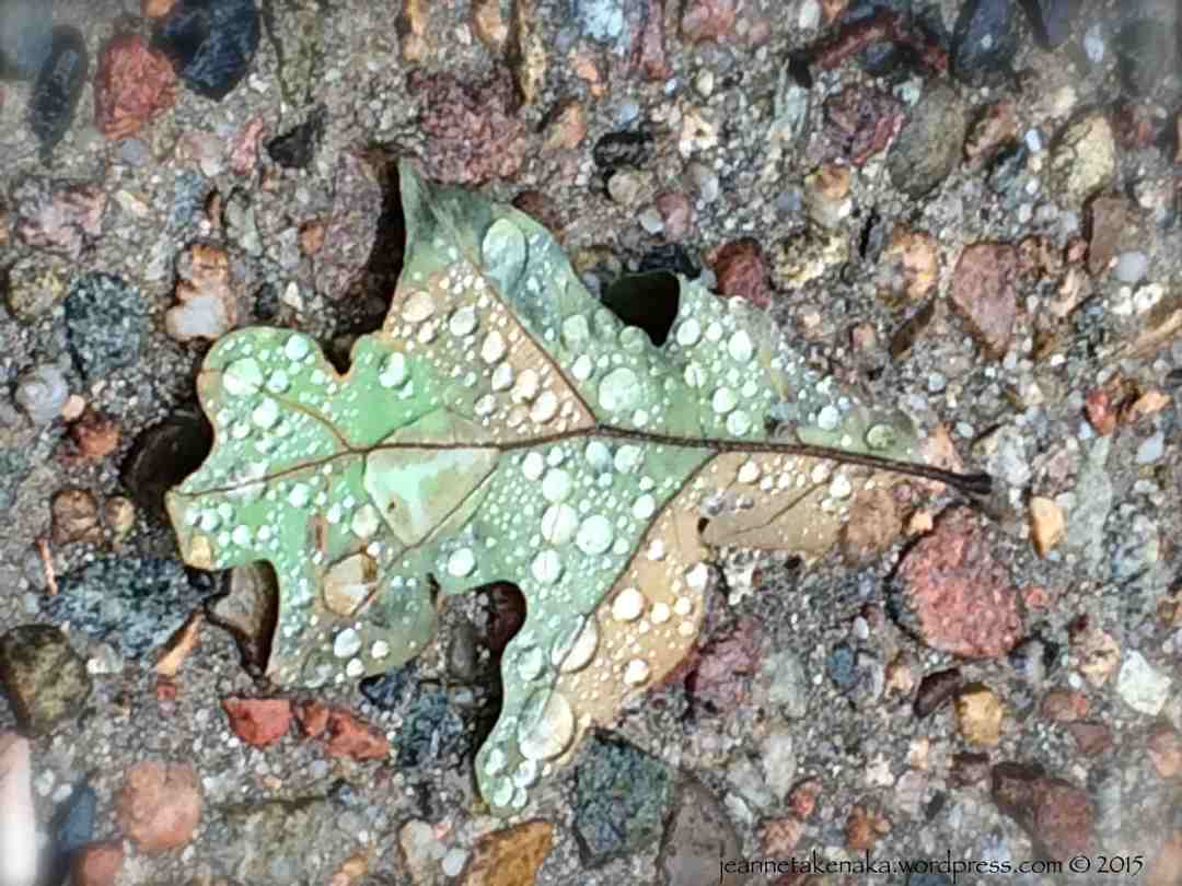 A multi-colored leaf with rain drops on it