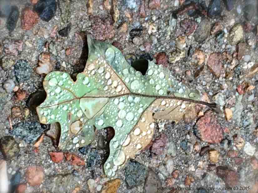 A leaf with rain drops on it