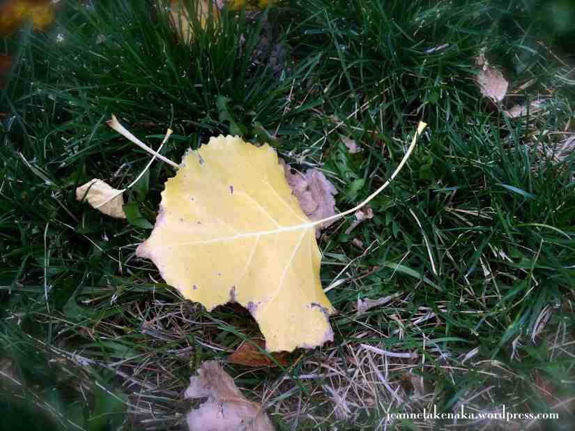 A yellow leaf with pieces broken off of it—imperfect in appearance