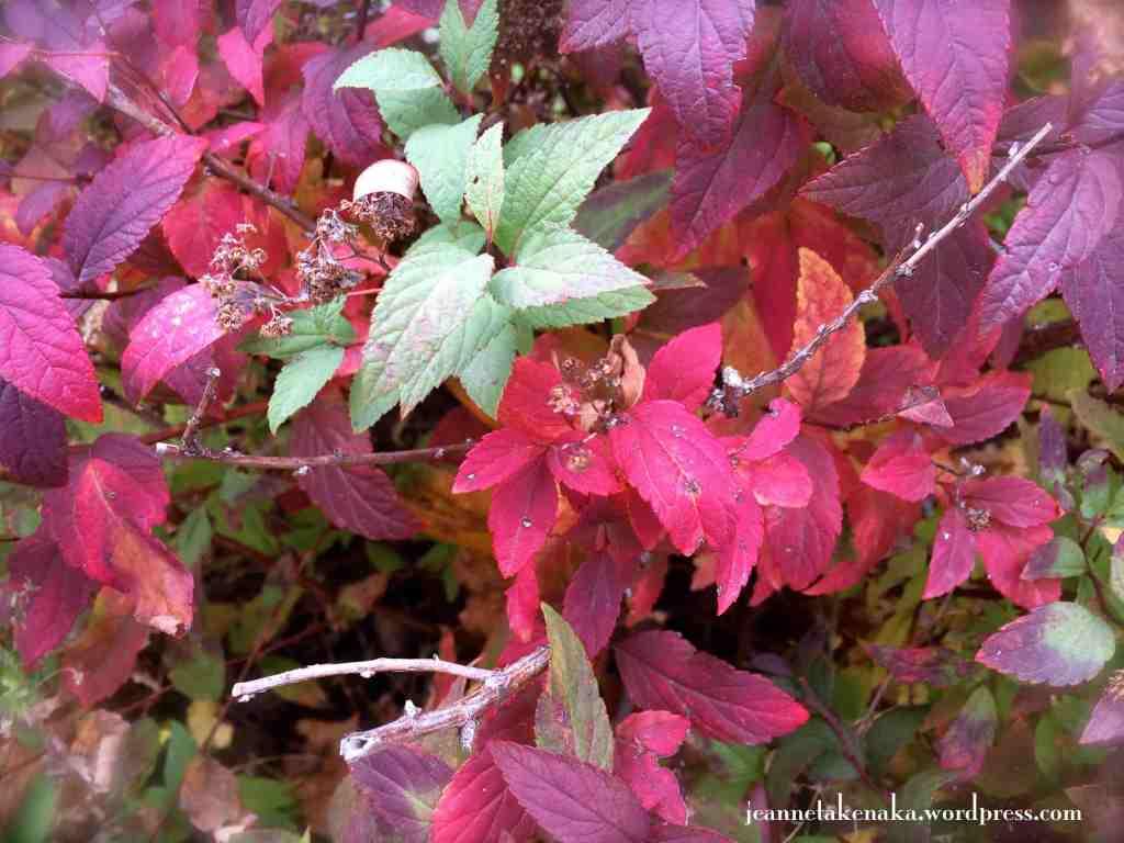 Colorful bush