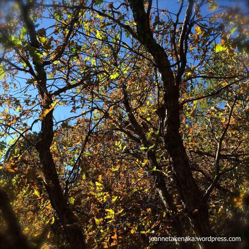 Leafy busyness