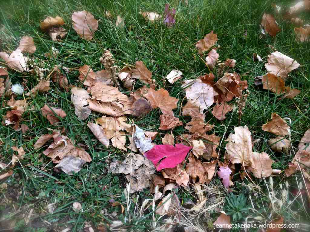 Red leaf among busy brown