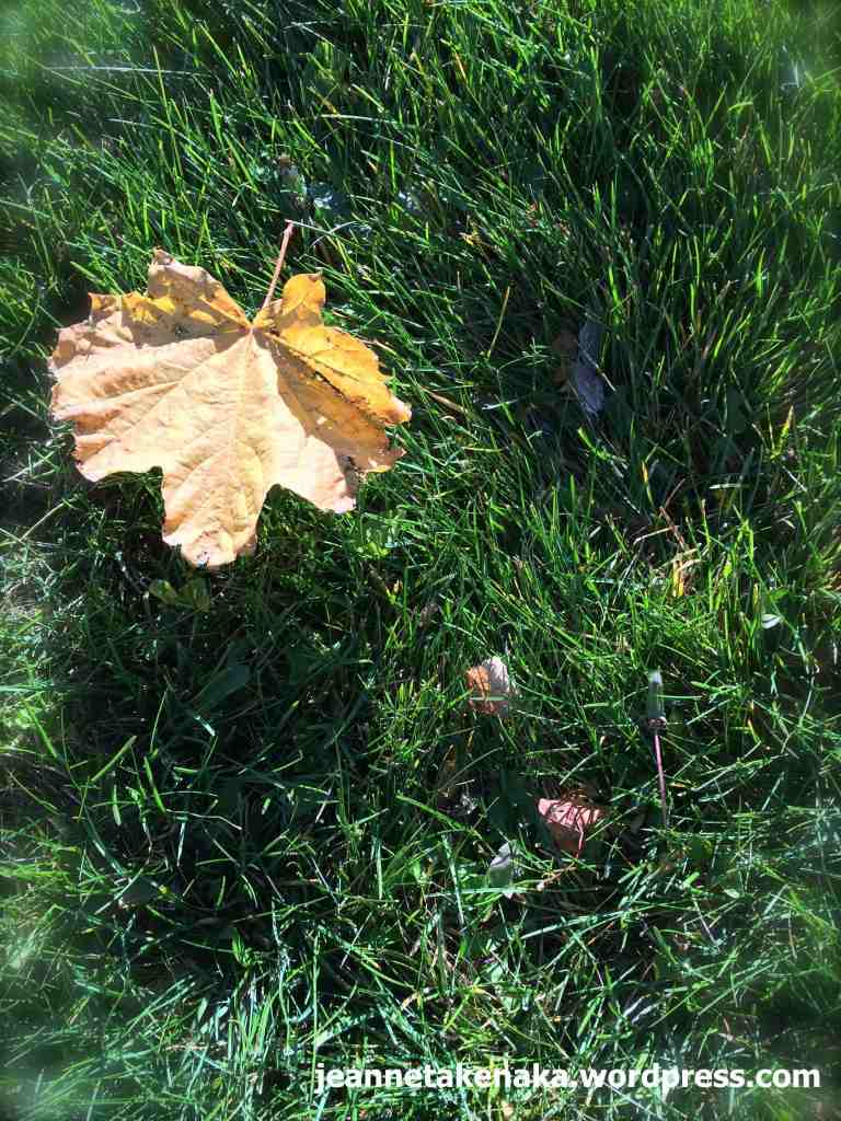 Sunning leaf