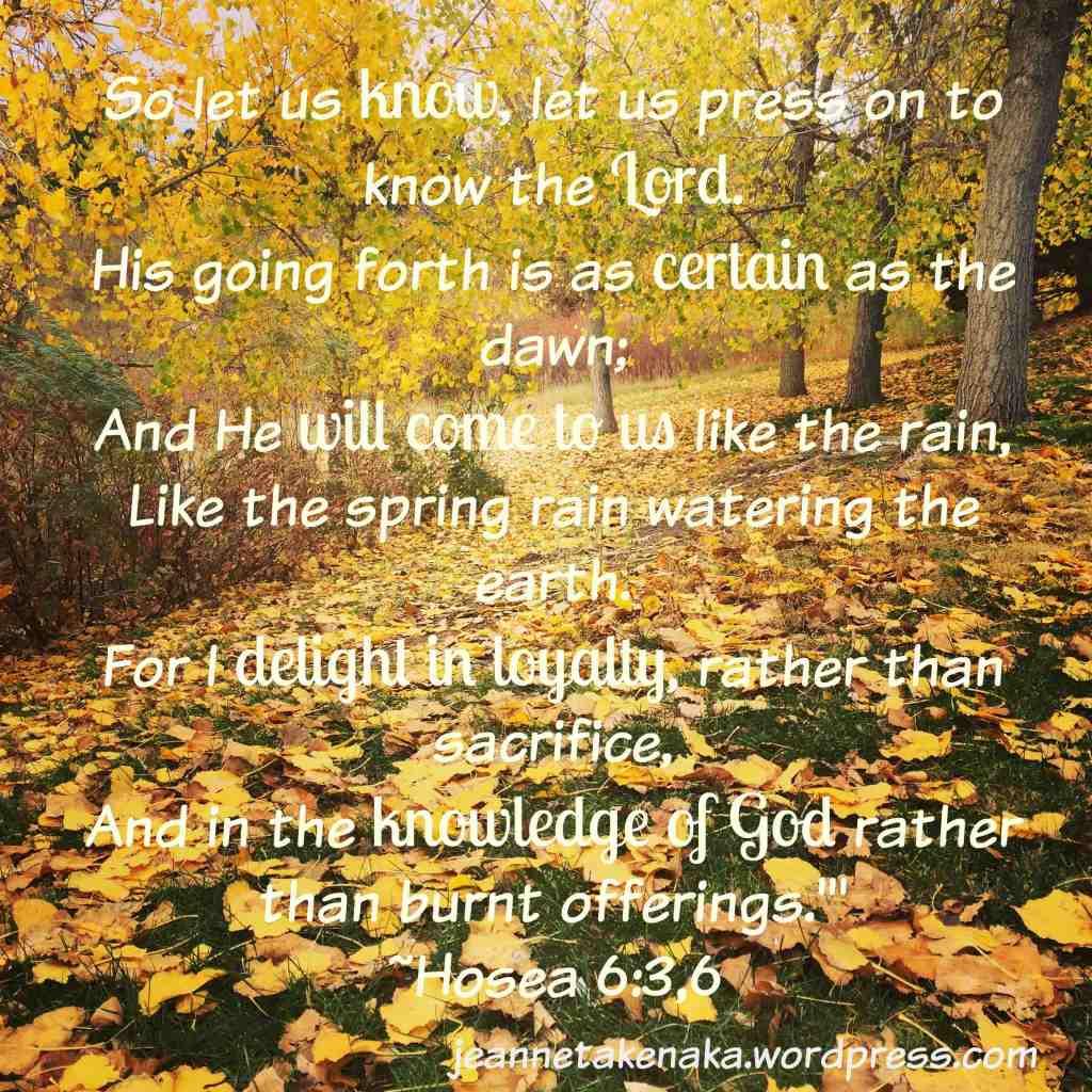 Autumn leaves Hos 6 copy