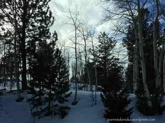 Quiet trees