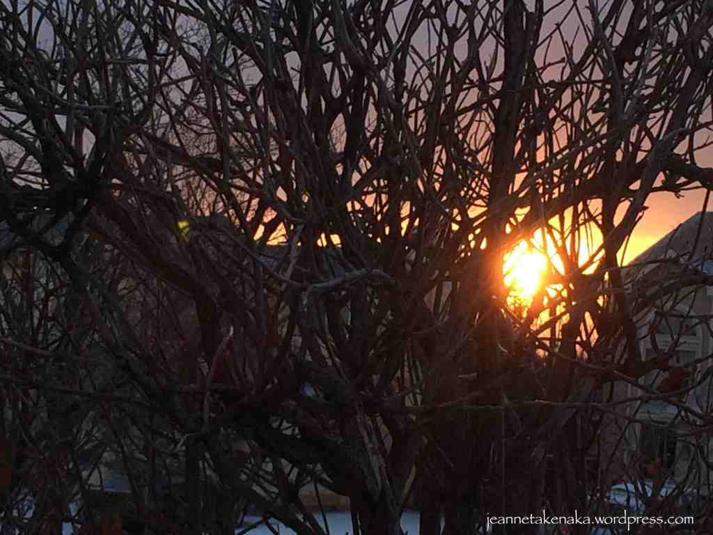 Sun tangled in branches