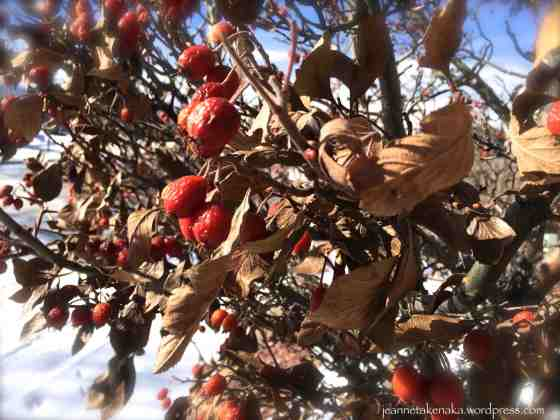 Winter shriveled fruit