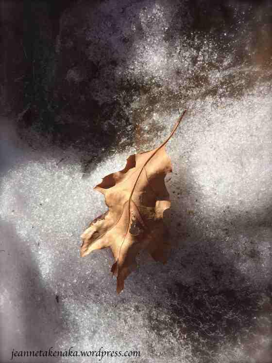 Leaf with hole