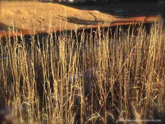 Tender grasses