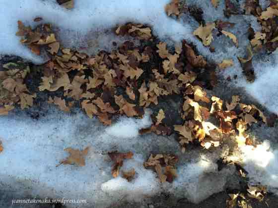 Winter leaves on snow