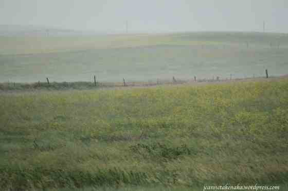 Rain pounding fields